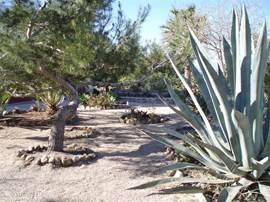 De mediterranean tuin met zijn vele palmbomen en vruchtbomen