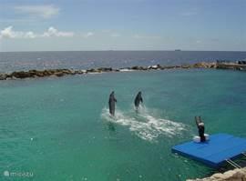 Dolfijnenshow in Seaquarium