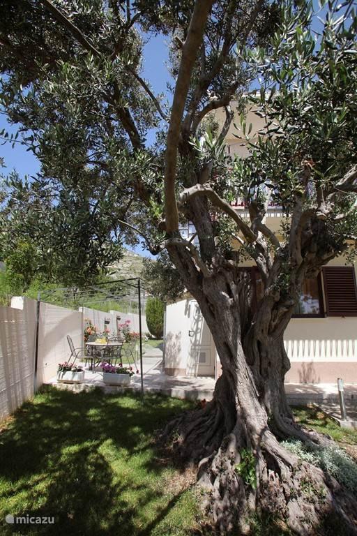 Nieuw appartement prachtig gelegen op orangerie Trogir. 3 prachtige nieuwe rustig gelegen appartementen zijn gelegen in Seget Donji, klein vissersdorpje, op slechts 2,5 km van Trogir centrum. De stad Trogir de oude kern is onder bescherming van UNESCO