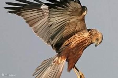 Vogels en andere dieren gespot rond het huis