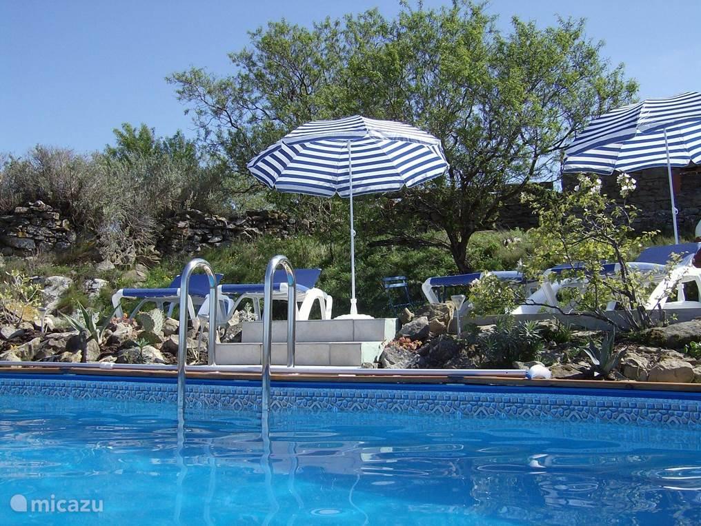 Zonnebaden tussen subtropische planten en natuurstenen achtergrond, prima voor textielloos zonnen en zwemmen.
