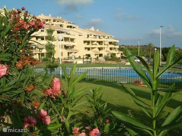 Vacation rental Spain, Costa Blanca, Orihuela apartment golf appartementen Albatros Campoamor