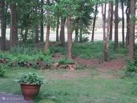 Vanaf het zonnige terras (op het zuiden) kijkt u zo een weiland in. En op de achtergrond weer een volgende bospartij. Hier komen langs de bosrand reeën voor en in de tuin zitten regelmatig eekhoorns. Verder een zeer gevarieerd soort aan vogels.