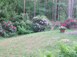 De rododendrons in de tuin markeren de overgang van het grasveld naar de bostuin. Er is een mooi groot grasveld aan twee zijden van de bungalow.