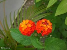 Veel leuk gekleurde planten vrolijken onze tuin op.