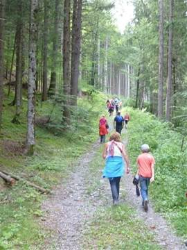 Hiking trail through the forest to the Odenhutte.