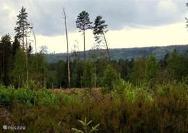 de woning is omgeven door eindeloze bossen