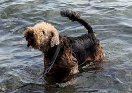 ook vakantie plezier voor uw hond