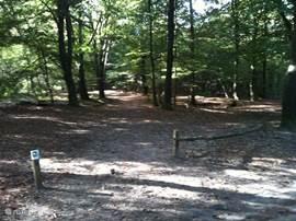 Het bos waar u heerlijk kunt wandelen en fietsen.