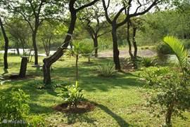 de tuin gelegen vóór het vakantiehuis met uitzicht op grote vijvers met veel vogelleven