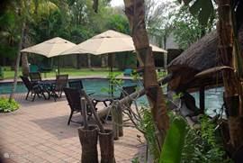 hoofdzwembad met veronken bar en terras met zitjes en zonnebedden