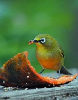 vogel in de tuin van het vakantiehuis