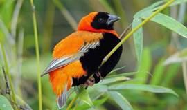 bishopsbird in de tuin van het vakantiehuis