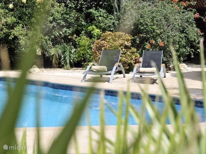 Bij het zwembad kunt u heerlijk relaxen in de zon of in de schaduw onder de Palapa.