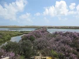 natuurgebied Ria Formosa