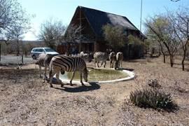 Dieren bij het huis en bij de drinkplaats voor de dieren.