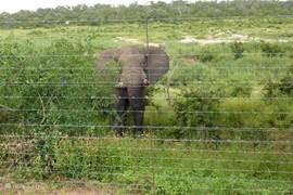 Olifant bij het hek, bekeken vanuit het Marloth park