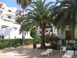 Tuin met vele schitterende palmen en bloemen bij zwembad. Achter complex is ook een tuin met fontein.
