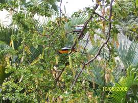 Flora & Fauna of Curacao