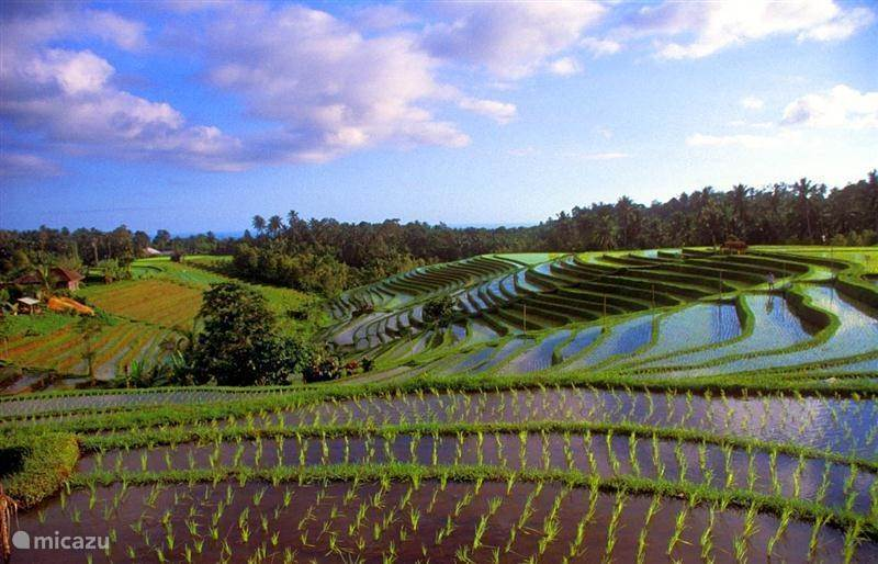 Bali (algemeen)