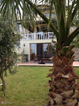 aanzicht tuin met palmbomen