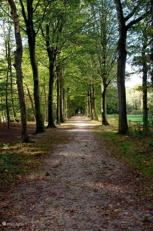 Heerlijk wandelen in het bos, direct vanuit de vakantiewoning