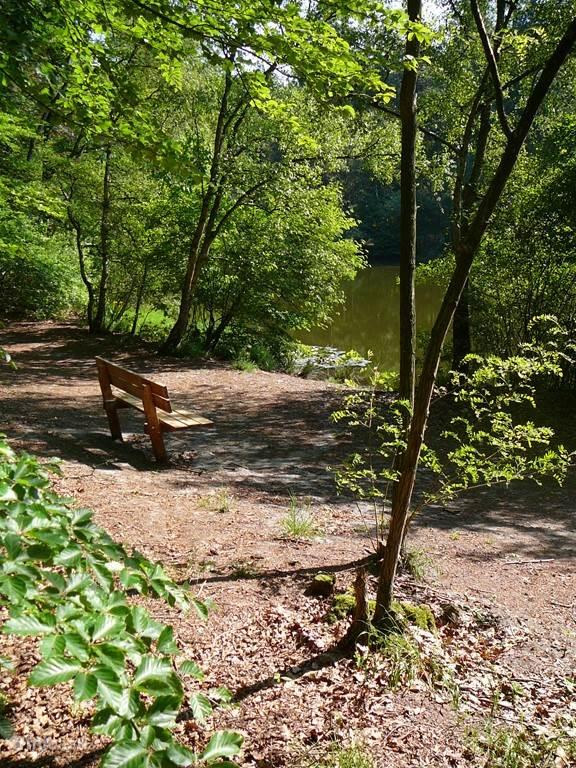 Wandelroute door het bos