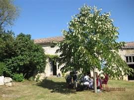 Onder de lindeboom midden op de binnenplaats staat 's zomers de eettafel.