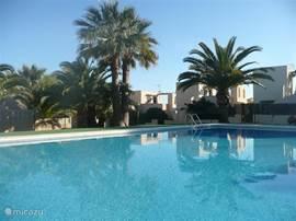 Mooi gelegen zwembad met fraaie palmbomen! Lekker afkoelen in dit heerlijke zwembad of je dagelijkse baantjes trekken. Wat een leven!