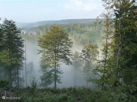 Aan de Rennsteig, een 180km lange wandel en fietsroute door het Thüringerwoud