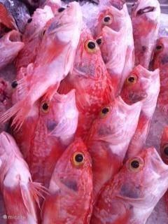 vis op de vismarkt van Ciutadela ligt klaar om gekocht te worden.