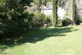grasveld omringt door citrusbomen. lekker om even een beetje met de bal te spelen