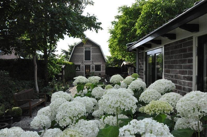 Vakantiehuis Nederland, Noord-Holland, Sint-Pancras - bed & breakfast De Oude Walnoot