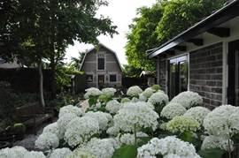 In de zomer bloeien de Annabelle hortenia's prachtig.