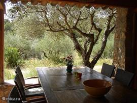 Your favorite place: at the table on the covered outdoor terrace, with the olive tree within reach and view of the site.