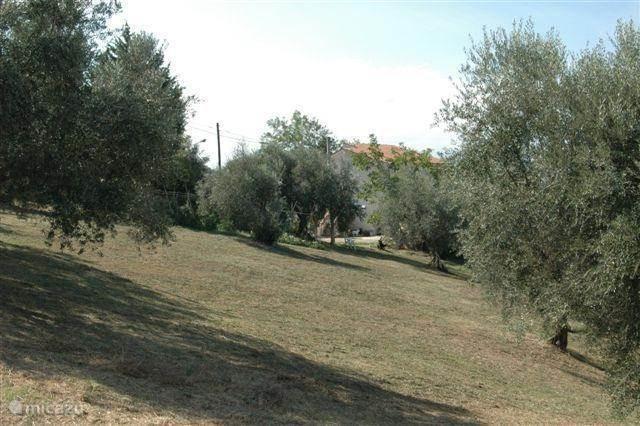 olijfolie van eigen land