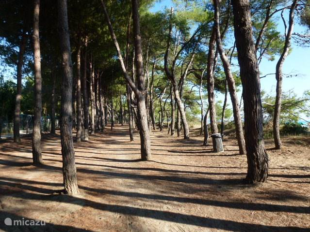The coast of Abruzzo, with the car seat you in 35 minutes on the beach. Along the coast is a simple promenade with restaurants. Between the promenade and the beach you will find a wide stretch of pine trees, where you can hike, bike or picnic in the shade.