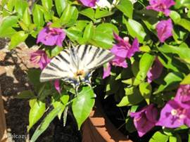 vlinder in de tuin