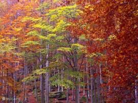 Herfst op de Monte Amiata