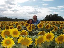 In the vicinity you can enjoy beautiful views, as here a sunflower field.