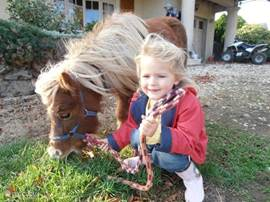 Kids love to play with the Mini Falabella ponies.