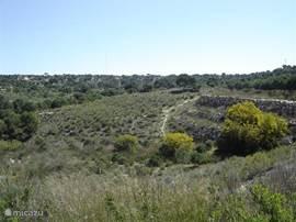 De bosachtige omgeving tussen Rojales en Guardamar, dit gebied begint tegenover de villa.