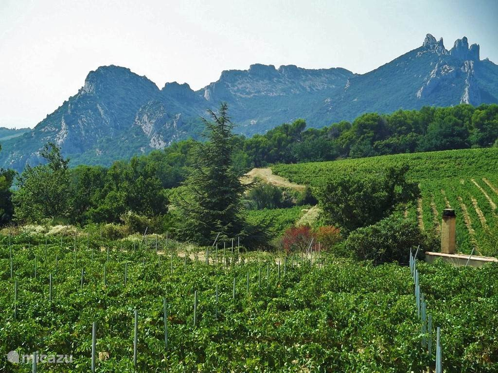 Les Dentelles de Montmirail protect Beaumes against the mistral.