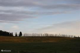 Oprijlaan met cypressen