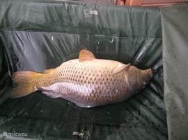 De familie Dirix-Andries ving in juli 2012 tijdens hun verblijf in ons huisje o.a. deze karper van 12 kg. en 400 gram.
