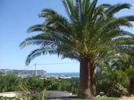 Drie palmbomen zijn er in totaal. En eentje aan de andere kant van het huis is pas ontsproten. In de verte de baai van Javea. s´Avonds met verlichting een plaatje van een tuin.