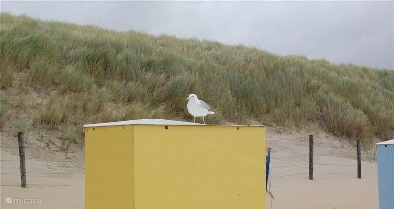 Vakantiehuis Nederland, Zuid-Holland, Katwijk geschakelde woning Zee en Duin