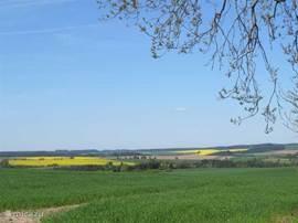 De omgeving met graanvelden en bossen.