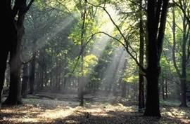 bos in omgeving
