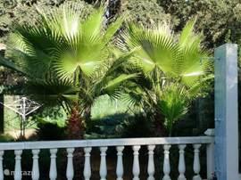 Palms gehören in einem spanischen Garten.